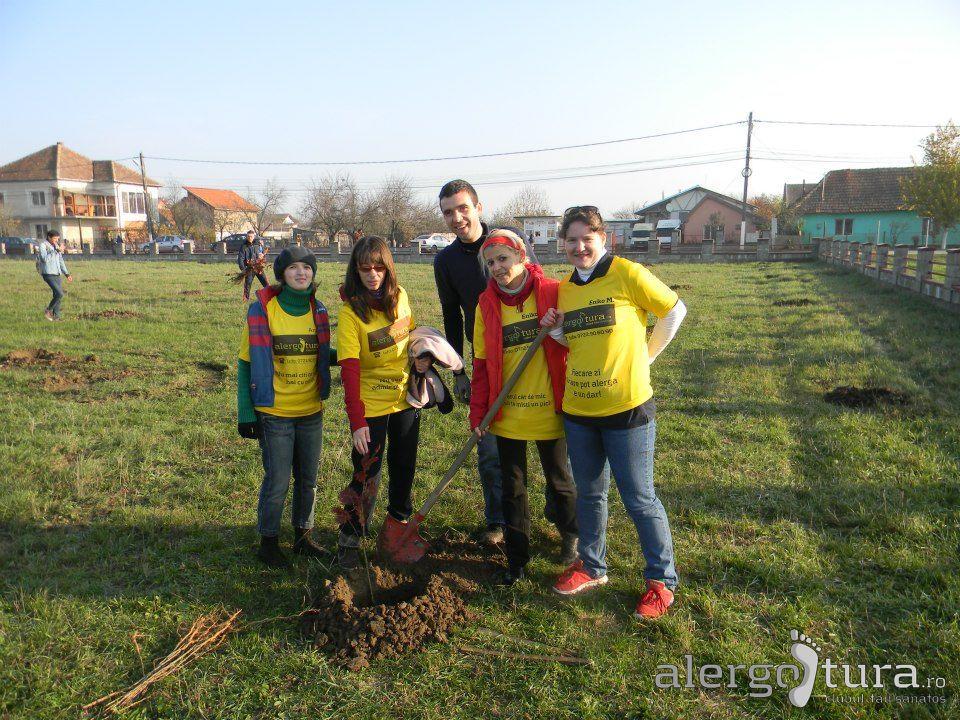 Alergotura la plantat de copaci