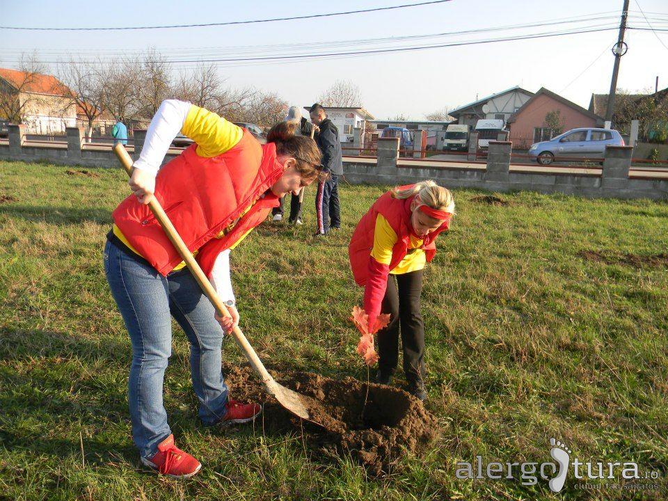 Plantat de copaci la Mosnita Veche